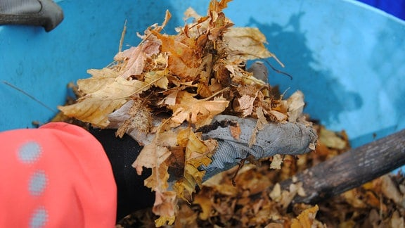 Klein gehäckseltes Herbstlaub in einem Eimer aus Kunststoff