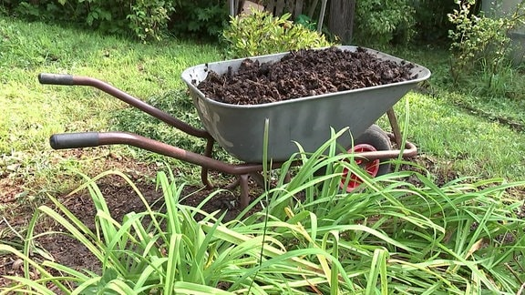 Eine Schubkarre, die mit Pferdeäpfeln gefüllt ist, steht in einem Garten