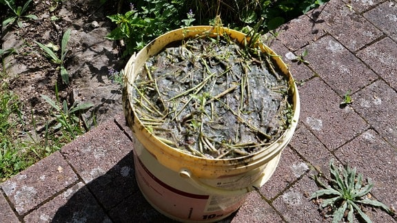 Jauche aus Pflanzenresten in einem Eimer