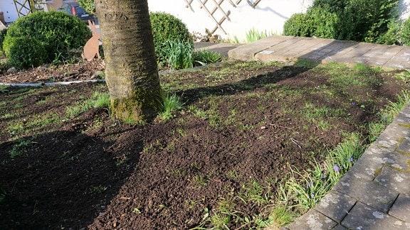 Kompost auf Rasenfäche