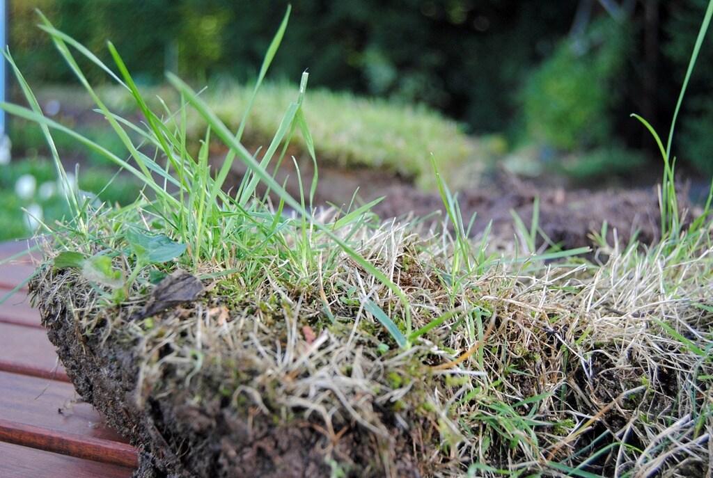 Lieblings MDR Garten: Rasen im Herbst nachsäen, düngen und pflegen | MDR.DE &VT_07