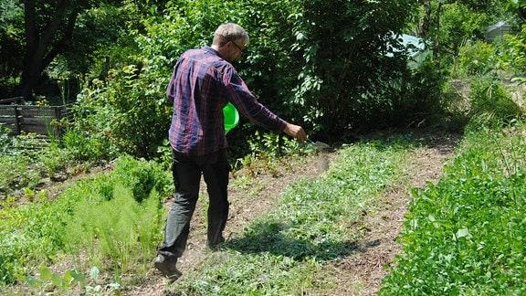 Der MDR Garten-Redakteur Jörg Heiß geht an einem mit Gründüngung bepflanzten Beet an einem hang in einem Kleingarten entlang und streut grauschwarzes Pulver auf die Erde