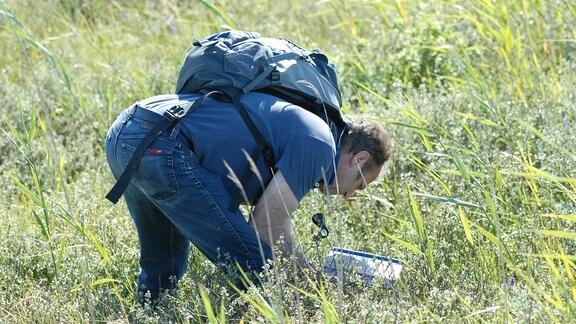 Der Botaniker Dr. Werner Westhus läuft gebeugt mit einem Insektennetz über eine Wiese.