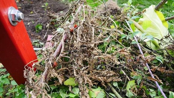 Auf einem Haufen liegen vertrocknete Zweige mit Blättern und Fruchtresten.