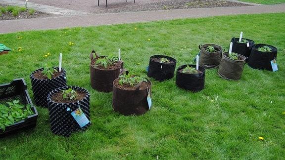 Zehn verschiedene Pflanzgefäße, darunter auch Taschen mit Trageschlaufen, die mit jungen Tomatenpflanzen bepflanzt sind, stehen auf einer Rasenfläche im Egapark in Erfurt