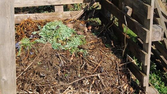 Ein Komposthaufen mit frisch ausgezupftem Unkraut und Strauchschnitt.