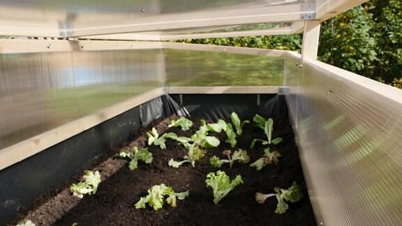 Hochbeetaufsatz mit Salatpflanzen