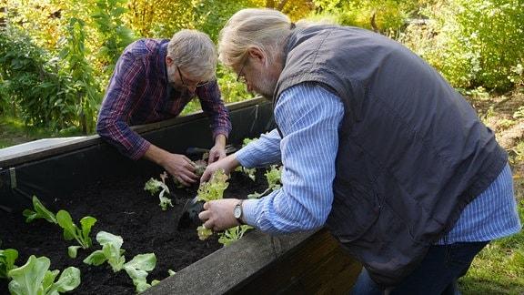 joerg heiss und martin krumbein pflanzen salat