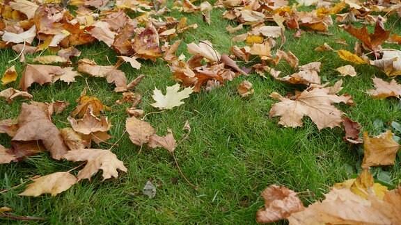 Auf einer Wiese liegen viele abgefallene Blätter.