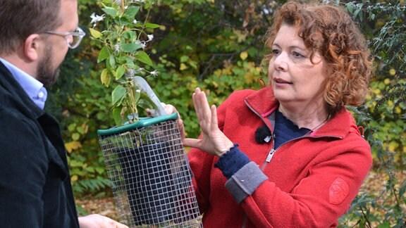 Gartenfachberaterin Brigitte Goss zeigt, mit einem Korb gegen Wühlmäuse in der Hand, wie tief dieser eingegraben wird