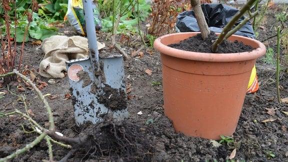 ein Spaten steckt in der Erde neben einem Blumentopf mit Pflanze