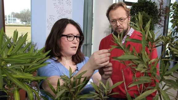 Die Gärtnerin Melanie Trinks vom egapark in Erfurt steht mit MDR Garten-Moderator Jens Haentzschel bei einer Aufzeichnung des MDR Gartens im Foyer des MDR-Landesfunkhauses Erfurt hinter einem Oleander und hält ein Blatt