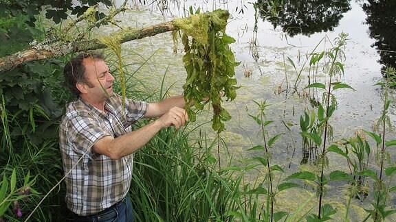 Der Botaniker Dr. Werner Westhus untersucht Algen, die an einem Ast hängen.