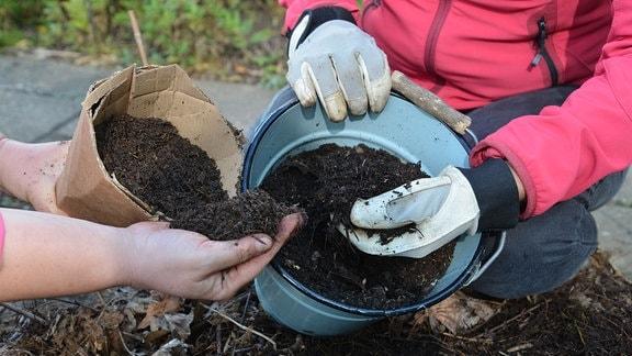 Hände von Gärtnern greifen in Gefäße und zeigen verschiedene Lauberden