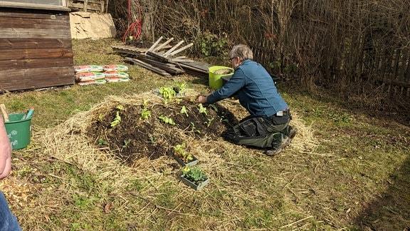 Hügelbeet bepflanzen