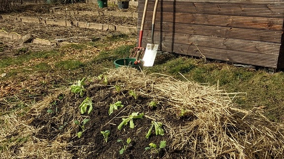 Hügelbeet mit Salat