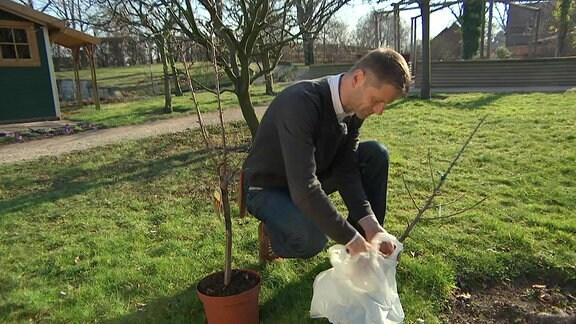Ein Mann mit Hemd und Pullover darüber kniet im Sonnenschein auf einem Gartengelände mit Rasen und noch kahlen Bäumen vor einem Plastikbeutel mit einem kahlen Mini-Gehölz darin