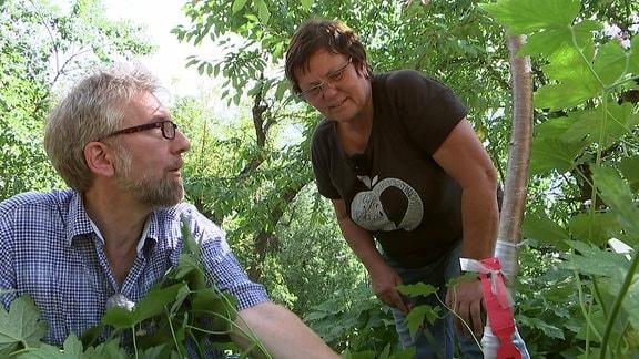 Klingärtner Jörg Heiß und Obstbauexpertin Monika Möhler mit veredeltem Kirschbaum