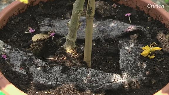 Scheuerlappen in einem Blumentopf.