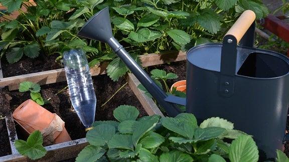 Auf einem Beet stehen zwischen Pflanzen Gießkannen und verschiedene Bewässerungshilfen.