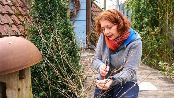 Gärtnerin Brigitte Goss schneidet Hortensien zurück