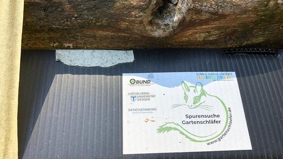 Die Karton-Stempel-Fallen sind mit einem Bild des scheuen Gartenschläfers bedruckt.