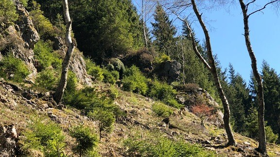 Steiniger Hang mit Bäumen.