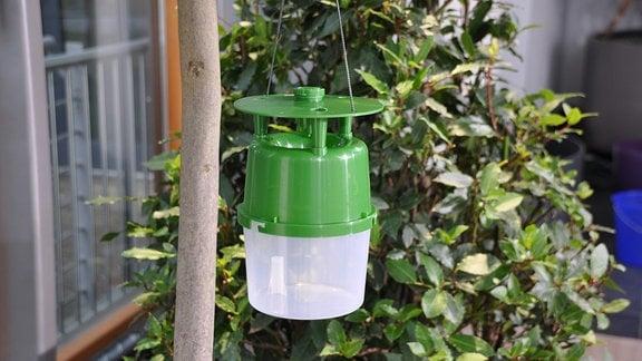 Neben einem schmalen Baumstamm hängt ein Plastegefäß. Im Hintergrund sind grüne Blätter an einem Busch zu sehen.
