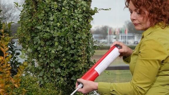 Brigitte Goss - eine Frau mit rotbraunen Locken - hält eine längliche Röhre mit einer langen Metallspitze in einen Buchsbaum.