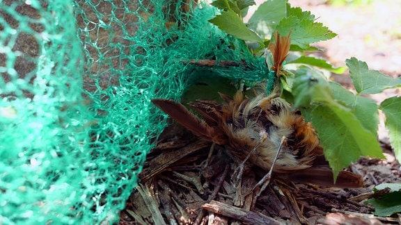Ein Vogel hat sich in einem grünen, grobmaschigem Netz verfangen.