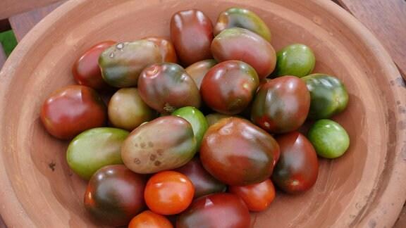 Tomaten in unterschiedlichen Formen und Farben  in einer Keramikschale