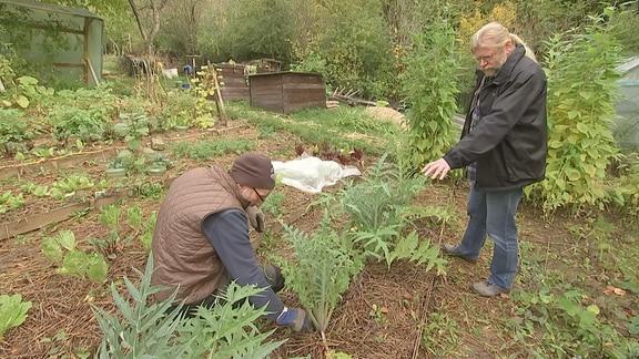 Winterschutz für Gemüse im Kleingarten