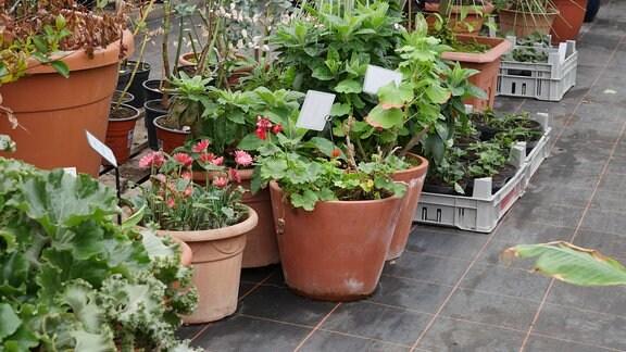 Pflanzen im Kübel und in Paletten.