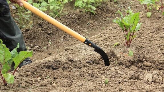 Jörg Heiß und Gartenexperte Martin Krummbein beratschlagen über das Gartenwerkzeug Sauzahn