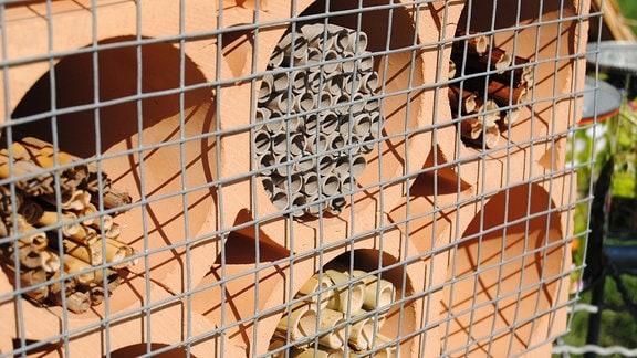 Ein Geflecht aus feinmaschigem Draht bedeckt ein mit Niströhren aus verschiedenen Materialien befülltes Bienenhaus aus Ton, das ursprünglich zum Lagern von Weinflaschen verwendet wurde
