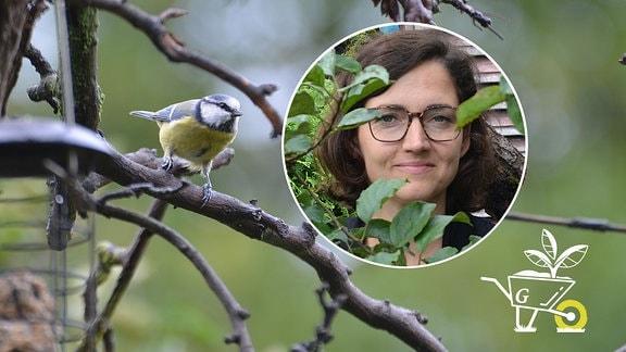 Komm mit in den Garten - Vögel im Garten richtig füttern