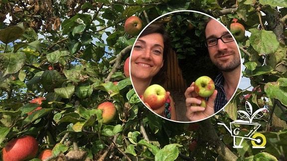 Podcast Äpfel ernten / lagern