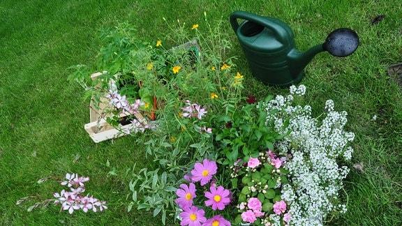Blick auf verschiedene Sommerblumen und eine Gießkanne, die auf einer Wiese stehen.