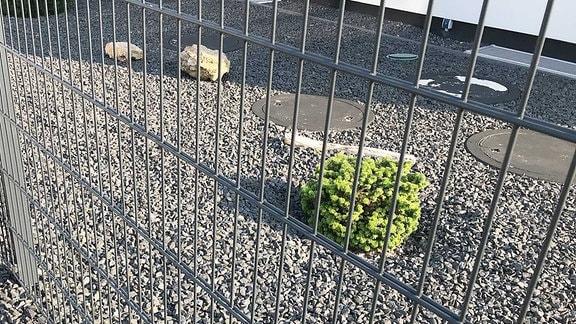 Schottergarten hinter Metallzaun als Vorgarten.