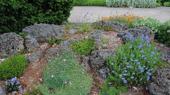 Mehrere niedrige, polsterartig wachsende Pflanzen in einem abschüssigen Steingarten zwischen Felsbrocken