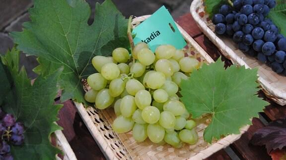 """Hellgrüne Tafeltrauben der Sorte 'Arkadia' liegen mit zwei Weinblättern und einem Zettel mit der Aufschrift """"Arkadia"""" in einem Körbchen"""