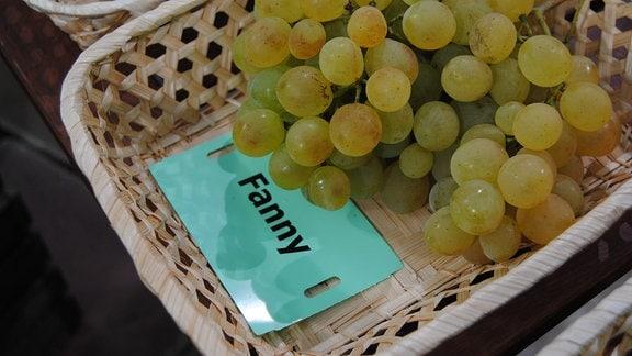 """Grüne, zum Teil leicht braun angelaufene Tafeltrauben der Sorte 'Fanny' liegen mit einem Zettel mit der Aufschrift """"Fanny"""" in einem Körbchen"""