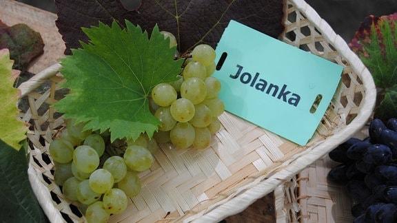 """Grüne Tafeltrauben der Sorte 'Jolanka' liegen mit zwei Weinblättern und einem Zettel mit der Aufschrift """"Jolanka"""" in einem Körbchen"""