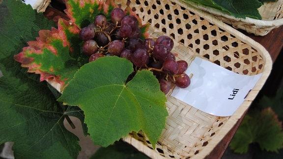 """Rosa Tafeltrauben der Sorte 'Lidi' liegen mit zwei Weinblättern und einem Zettel mit der Aufschrift """"Lidi"""" in einem Körbchen"""