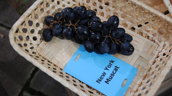 """Dunkelblaue Tafeltrauben der Sorte 'New York Muscat' liegen mit einem Zettel mit der Aufschrift """"New York Muscat"""" in einem Körbchen"""