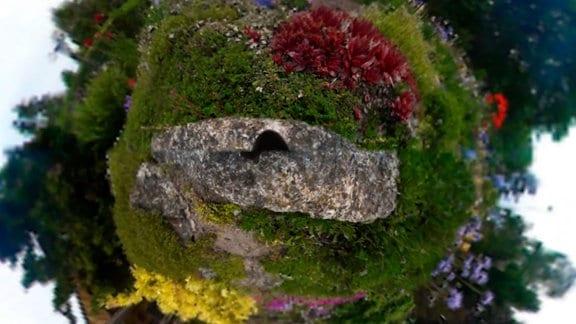 360 Grad Standbild des Iris-Traumgartens