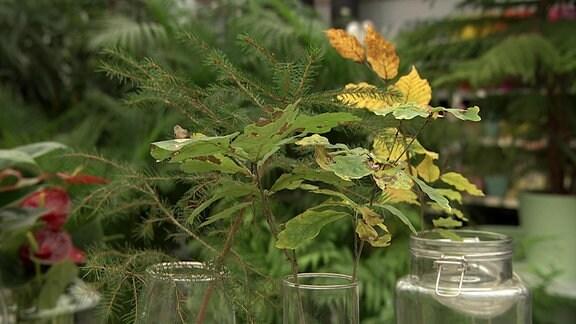 Waterplants - Die Attraktivität ist oben und unten schön.