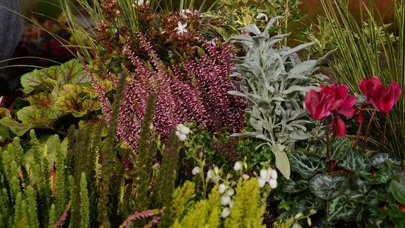 Ein Blumenkasten mit verschiedenen Pflanzen für die Herbstsaison.