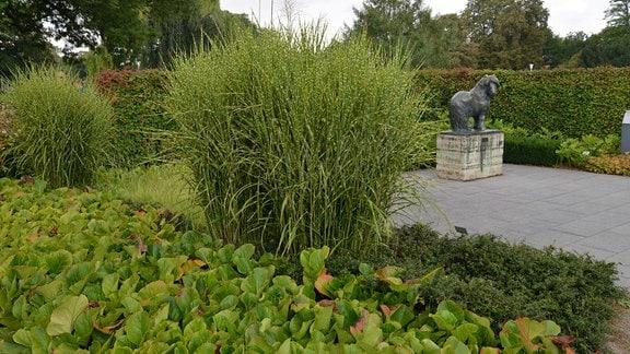 Hoch wachsendes Gras im Skulpturengarten des egaparks mit einer besonderen Blattfärbung. Die grünen Halme haben gelbe Flecken.