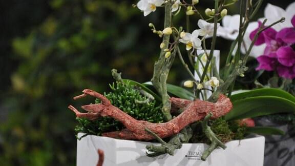 Detailaufnahme einer flach, aber buschig wachsenden, grünen Pflanze mit Holz, Moos und einer Orchidee in einem Topf.